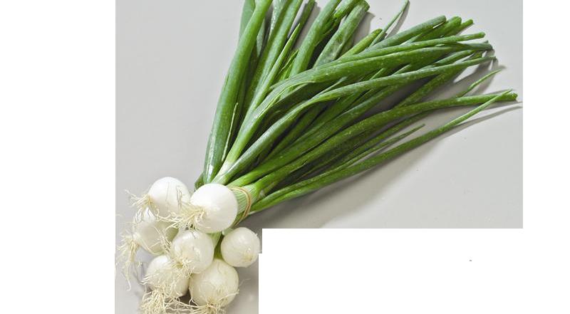 oignons blancs botte bio alsace