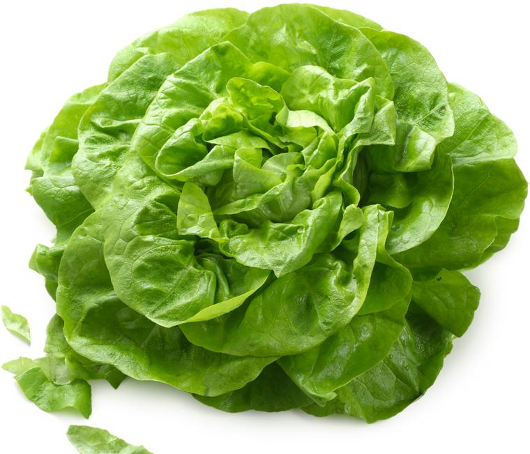 Image gallery laitue - Salade verte calorie ...