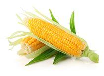 maïs bio