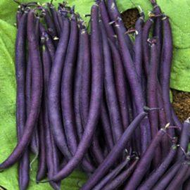 Haricot violet bio