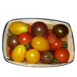 tomate cerise tricolore bio