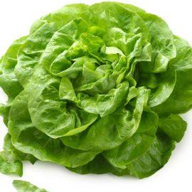 Salade Laitue bio Alsace
