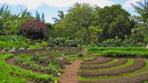 Développement de la permaculture en France